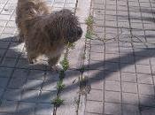 Perro peludito pequeño calle, abuelito. (Huelva)