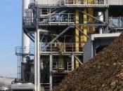 Biomasa cabeza generación puestos trabajo