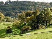 Sierra Norte Sevilla: pañuelo verde blanco