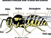 Anatomía Avispa
