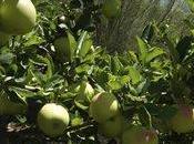 Lleida: punto encuentro para investigación producción fruta