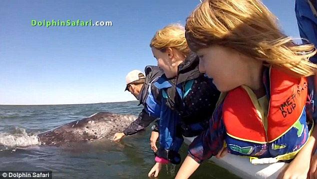 cría de ballena busca caricias pasajeros barco