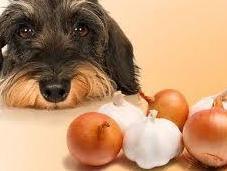tramposas verdades sobre alimentos prohibidos para perro