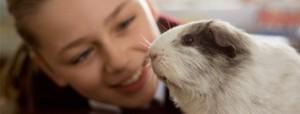 Autismo mascotas y juguetes para el desarrollo de habilidades sociales