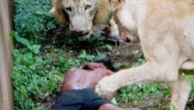 pene de los leones