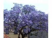 árbol salvará mundo