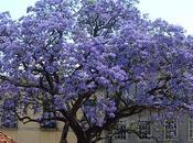 revolución Kiri, árbol puede salvar mundo