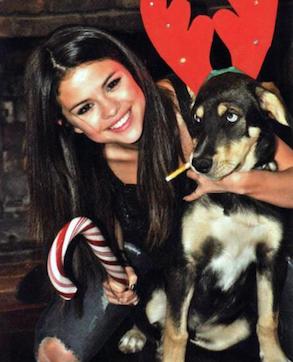 Baylor,  el perro de Justin Bieber y Selena Gómez