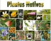 Descripción de las Plantas Nativas o Autóctonas