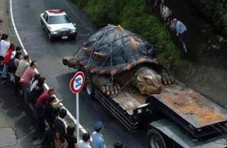 En el Río Amazonas: ENCUENTRAN A LA TORTUGA MAS GRANDE DEL MUNDO...