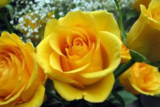 Flores de primavera Paperblog