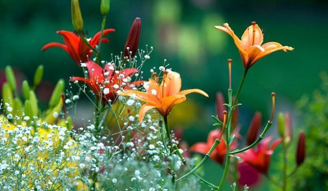 Flores de primavera paperblog - Plantas de temporada primavera ...