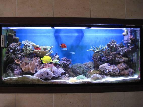 Hoy decoramos con acuarios paperblog - Acuario en casa ...