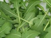 Cultivar rúcula, ideal para ensaladas