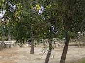 pinada Salesianos Campello