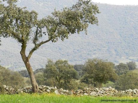 Dehesa, Patrimonio Cultural