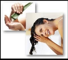 Cuidados del cabello con aloe vera paperblog - Cuidados del aloe vera ...