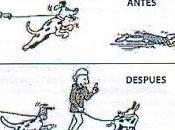 Como pasear perro