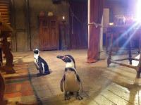 Águila Roja: silencio, pingüinos rodando.