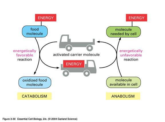 ciclo de anabolicos para volumen y definicion
