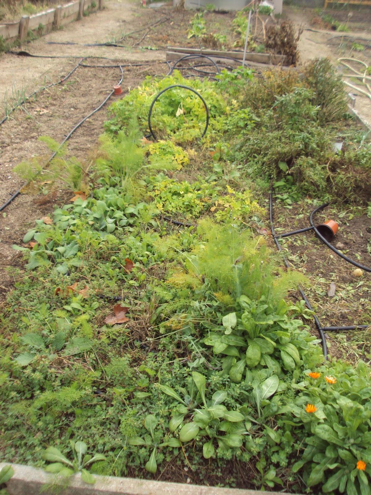 Plantas del huerto paperblog - Huerto de plantas aromaticas ...
