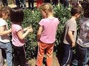 alumnos educación infantil recolectan habas