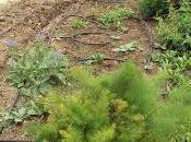 Plantas aromáticas, culinarias medicinales huerto