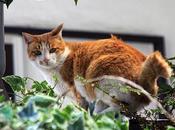 Gatos habladores, abuelos amantes pájaros batman enjaulado