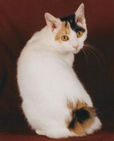 gatos fotos y razas de gatos en mundogatos.com