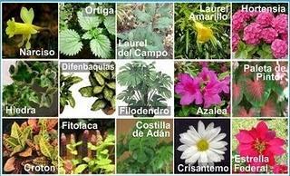 Plantas t xicas para gatos paperblog for Plantas ornamentales con sus nombres lamina