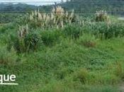 Costa Rica demandan Chiquita Brands amenazas vida daño ambiental