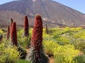 Vamos disfrutar Teide abril 2013