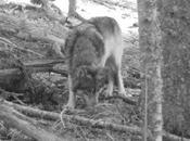 Cuentos estados. lección para gestión especies