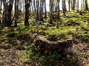Bosque Hayacorva Montes Ucieda