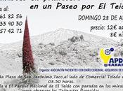 Vamos disfrutar Primavera Teide abril 2013