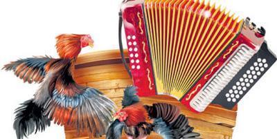Peleas de gallos, tradición viva del Festival de la Leyenda Vallenata