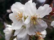 Primavera Valle Jerte