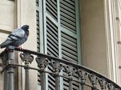 Barcelona: vista pájaro
