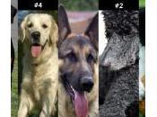 razas perros inteligentes (II)