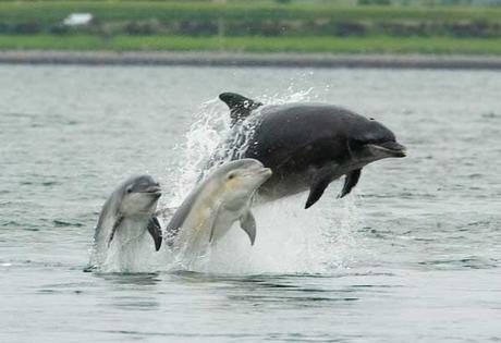 mamá delfín con su crías