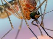 ¿Por algunas personas pican mosquitos otras?