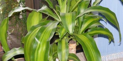 Plantas de interior beneficiosas paperblog - Ver plantas de interior ...