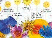 reloj floral Linneo