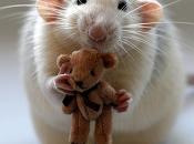 Marchando ratas... neuronas