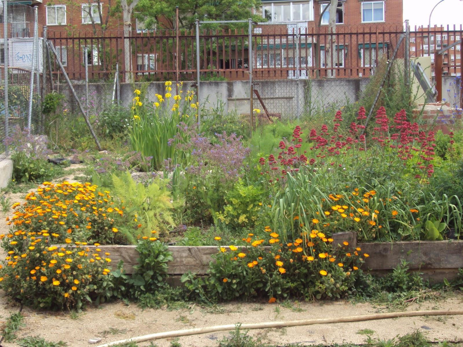 Gu a de plantas arom ticas culinarias y medicinales en el - Plantas de huerto ...