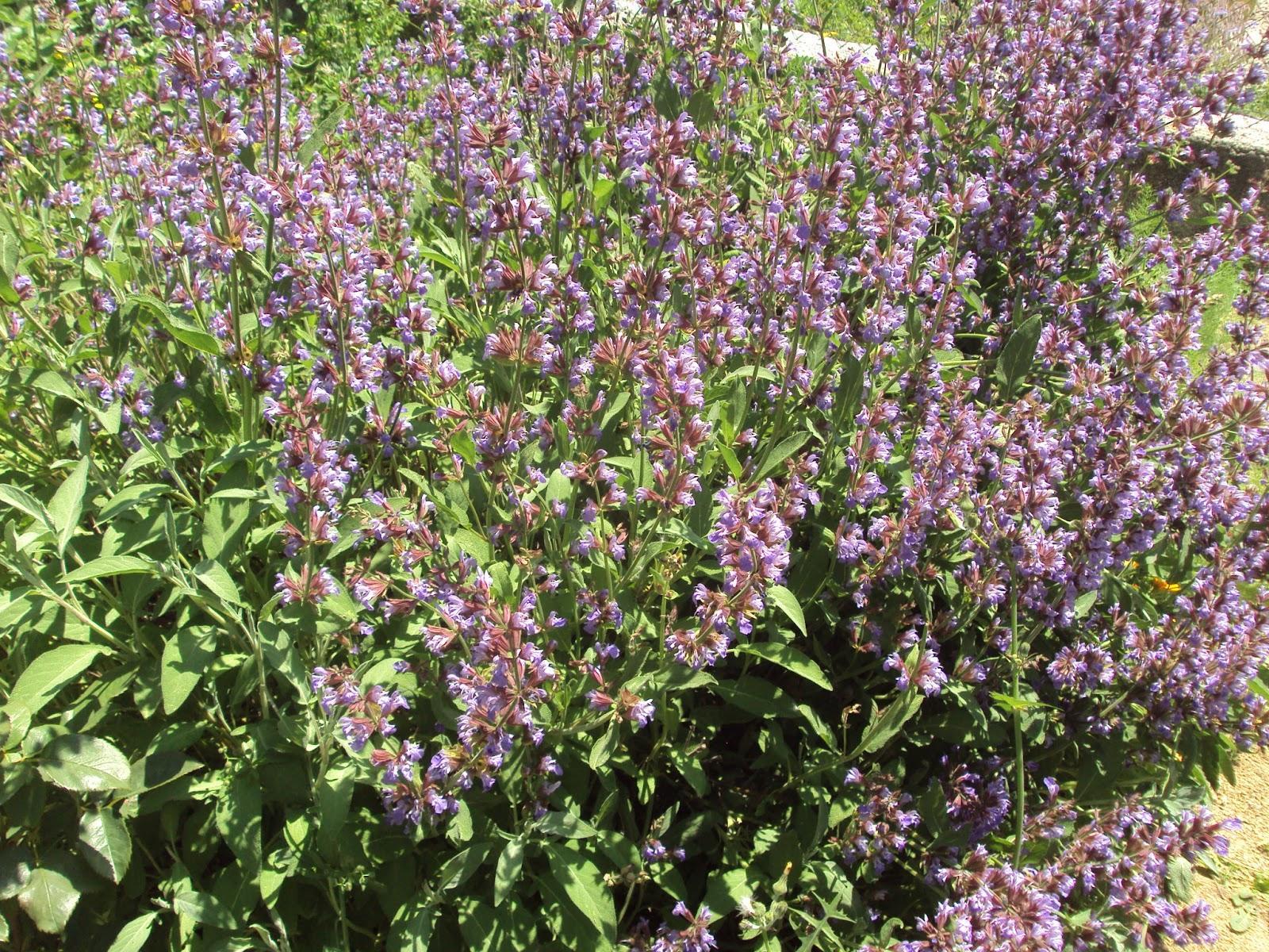 Gu a de plantas arom ticas culinarias y medicinales en el for Tipos de plantas aromaticas