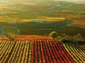 Rioja Alavesa. remanso tranquilidad