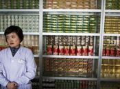 medicina tradicional Corea Norte: desde bilis hasta ginseng