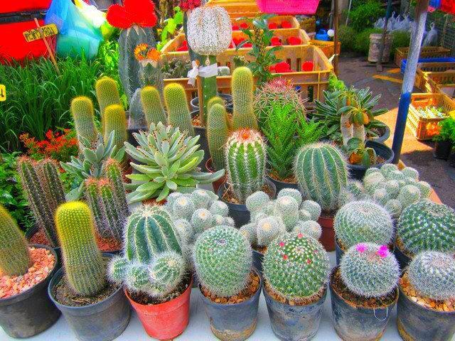 Una buena solucion plantar cactus paperblog for Cactus para interior