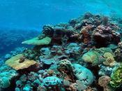 propagación arrecifes coral regida terremotos volcanes